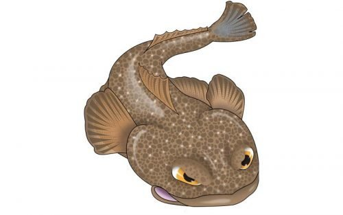 Flathead Fish Graphics