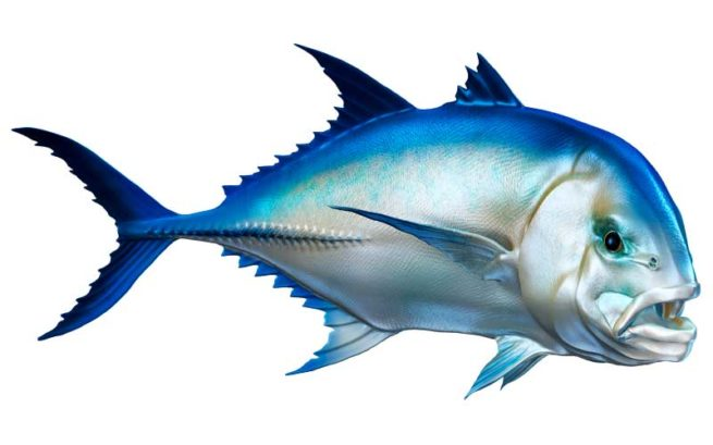 Giant Trevally Fish Graphics