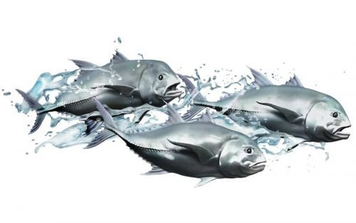 Giant Trevally School Fish Graphics