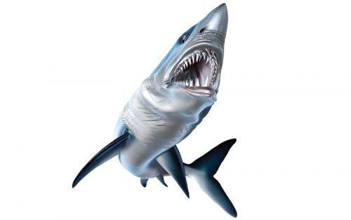 Mako Shark Fish Graphics