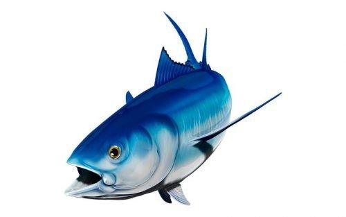 Bluefin Tuna graphics