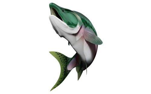 salmon fish graphics