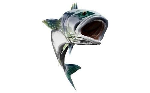 White Seabass Fish Graphics